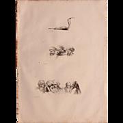 1802 Original Copper Engraving Cobra & Anthropological Stuidies from Napoleons Travels to Egypt (Vivant Denon) Page 104