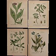 1880's Set of 4 Floral Lithographs - Flower & Botanical Prints