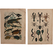 1840's Set of 2 Animal Engravings of Reptiles, Spiders, Scorpions & more  / Print of Fauna