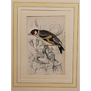 1830's Steel Engraving of a Goldfinch by Wm. Lizars (Sir William Jardine)