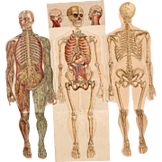 1900's Foldout Model of Human body - Medical Anatomy Chart from Bilz Natural Healing