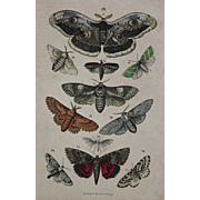 1840's Original Antique Lithograph of Butterflies / Moths