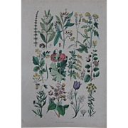 1840's Original Antique Lithograph - Botanical Chart of flowers and fruit