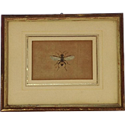 Stunning 19th Century Hand Coloured Engraving of Wasp Insect.