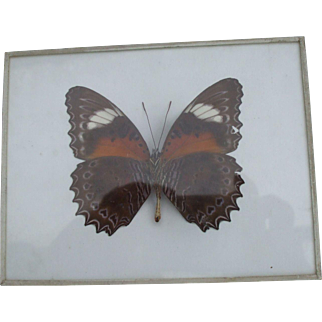 A Rare Early 20th Century Denton's Patent Butterfly Tablet