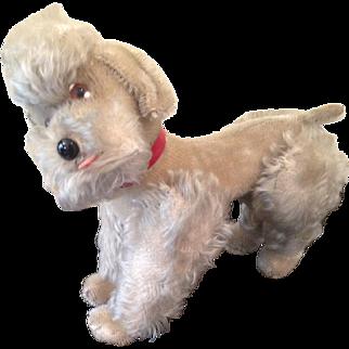 Steiff 1950's poodle