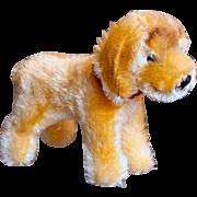 Cute Steiff Dog