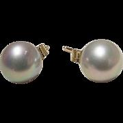 Akoya Cultured Pearl Earrings 14K Y- Gold Simple Studs 7.5 MM Rarest Gray - Vintage