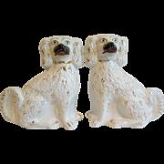 English Staffordshire Spaniel Dogs, Pair
