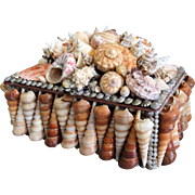 Large Sea Shell Box