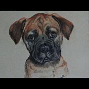 Boxer Dog Pastel Portrait, England