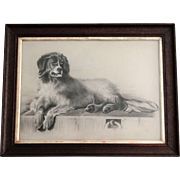 Antique Newfoundland Dog Charcoal Sketch, after Edwin Landseer