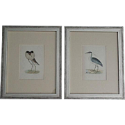Antique Hand Colored Birds Engravings, Set of 2, Rev Morris