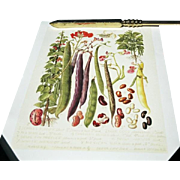 "Pair of Colorful Vegetable Prints in the Style of Antique Botanicals: ""Rhubarb & Asparagus"" & ""Beans"""