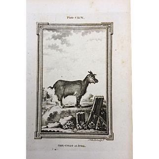 Goat Engraving --- late 19th Century
