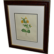 "Framed Book Plate- Redouté's ""Mimulus"""
