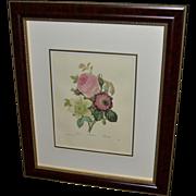 """Framed Book Plate- Redouté's """"Rose"""""""