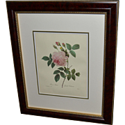 "Framed Book Plate- Redouté's ""Rosa Indica"""