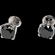 4.25ct EACH Black Diamond Studs in 14K White Gold Settings