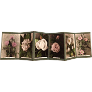 PORTFOLIO OF 6 HAND COLORED PHOTOGRAPHS BY C. W. JOHNSON - CIRCA 1915