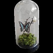 Artist OOAK Dollhouse Miniature Glass Butterfly Dome Curio 1:12