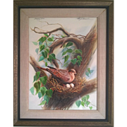 "Peter Smokorowski original watercolor ""Mourning Dove"""