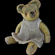 Petal, a lovely British teddy bear, 1930s