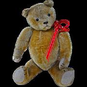 Tubs, a lovely American teddy bear, 1920s
