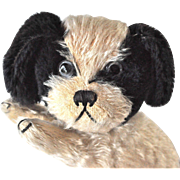 A very cute British mohair puppy, 1920/30s
