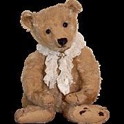 20 inch Steiff bear c.1910