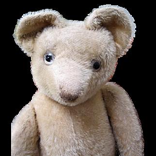 Chunky French bear by Pintel