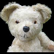 English teddy bear post war - white mohair