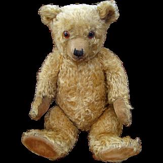 English Chiltern Bear 22 inches c.1930's