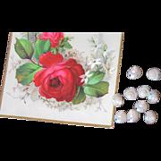 Antique Wedding Seashells-1880's