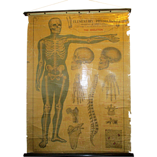 C1920 E.J.Arnold Medical Poster