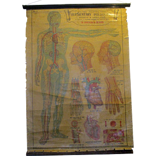 E.J.Arnold & Son Early C20th Medical Poster.