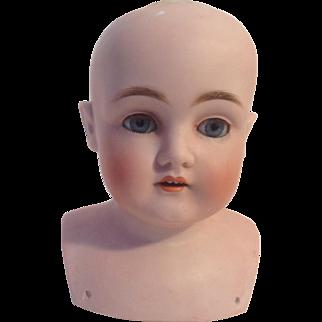 """6-1/2"""" Kestner #154 Bisque Doll Head"""