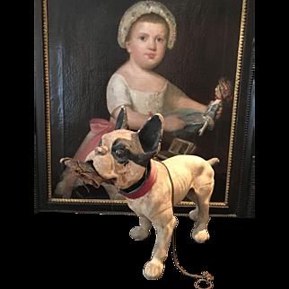 Very rare   French Bull Dog