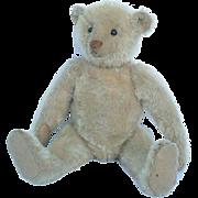 Delightful Antique Steiff White Mohair Teddy Bear FF Underscore Button
