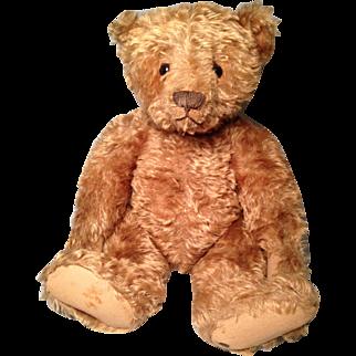 Early Blank Button Steiff Center Seam Teddy 20 inches tall