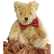 14 inch Golden Farnell Teddy Bear c1930