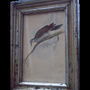 Edward Lear (1812-1888) Hand Colored Bird Lithograph, titled Peristera Rufaxilla.