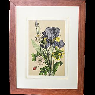 Colorful Graphic/Irises