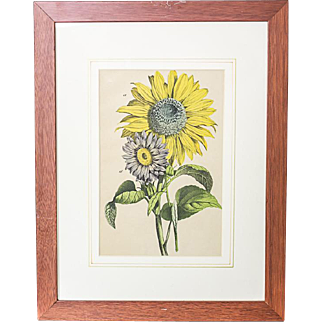 Colorful Graphic/Sunflowers