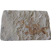 Hemisaurida Fossil - 98 Million Years - Hakel (Byblos) - Lebanon