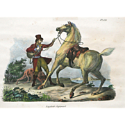 """Engelsch Jagtpaard"" Hand Colored Lithograph by Artist Vernet"