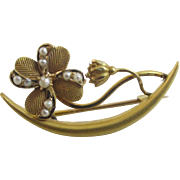 Seed pearl in 14k gold forget me not flower brooch pin Antique Victorian c1890