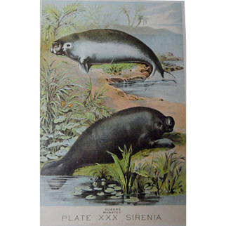 Antique bookplate, dugong (manatee) 1880 in vintage frame