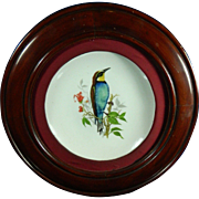Vintage Framed Hand Painted Meissen Style Porcelain Plate – Bird on a Tree Branch – Germany 20th Century