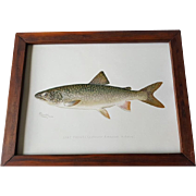 Original Denton Lake Trout Chromolithograph